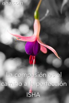 La compasión es el camino a la perfección. Isha Judd. Citas