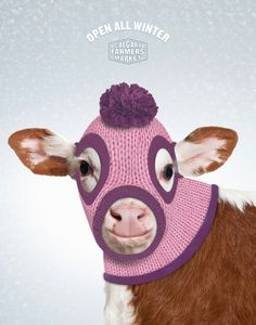 Open All winter—Calgary farmers market - Graphis