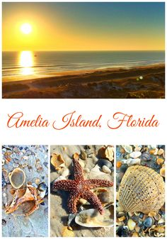 The amazing beaches of Amelia Island, FL Florida Vacation, Florida Travel, Florida City, Travel Usa, Vacation Destinations, Vacation Spots, Vacations, Places To Travel, Places To See