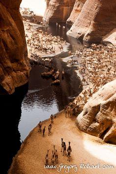 """mysleepykisser-with-feelings-hid: """" Guelta d'Archeï by      Grégory Rohart on 500px. Située au creux d'un canyon étroit, la guelta d'Archeï accueille quotidiennement les troupeaux de dromadaires. Les eaux hébergent également les derniers crocodiles..."""