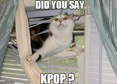 Did you say, KPOP? ㅇㅅㅇ
