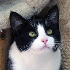 Animal Shelter Volunteer Life - Jack