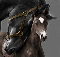How Long Do Horses Live and Everything about Horse Age All The Pretty Horses, Beautiful Horses, Animals Beautiful, Animals And Pets, Baby Animals, Cute Animals, Baby Horses, Wild Horses, Horse Photos