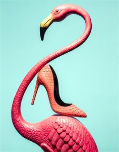 Flamingo shoes - Travis Rathbone