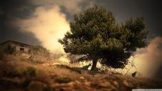 goats_under_oak_tree_on_a_hill