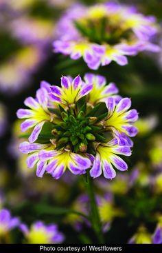 Ornamental Horticulture, Tattoos For Women Flowers, Manor Farm, Farm Nursery, Pressed Flower Art, Low Maintenance Plants, Tree Roots, Garden Living, All Plants