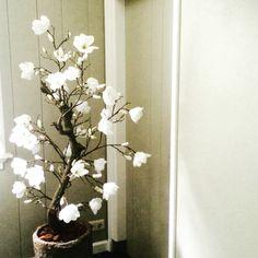 Magnoliaboom, kan gemaakt worden in verschillende kleuren, hoogtes, enz! Interesse, laat het ons weten!