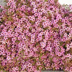 FiftyFlowers.com - Dark Pink Wax Flower
