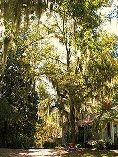 Hartsville, SC.  A beautiful little town...