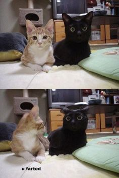 Funny cats-love the look on the black cat's face!