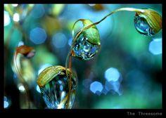 Macro_Photography