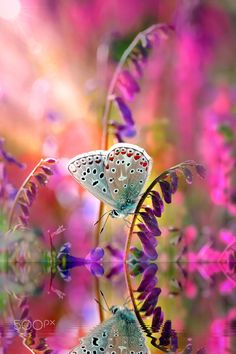 DREAM ... - Photography by Mustafa Öztürk