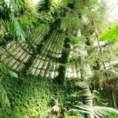 Madrid's Botanical Garden #conservatorygreenhouse