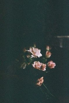 Hm.i love this photo #rose #flowers
