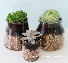 Easy gift idea! succulents-in-glass-containers
