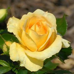 Just lovely Rose!