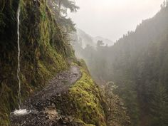 Eagle creek trail in the rain, Columbia Gorge area, Oregon, USA   #lasvegas  #chef   #food   #foodie   #foodblog   #travel   #traveltips  #holiday   #holidayseason  #Airlines #TravelTips #Vacation #India #usa #uk #Unitedsatates #Airfares #Airline #International #Airfare #Business #Flightdeals