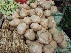 Le Jicama : Un légume méconnu, véritable trésor gastronomique | Blog Jardin Alsagarden - le magazine des jardiniers curieux