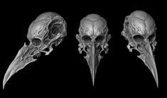 Skull Reference, Art Reference Poses, Armor Concept, Concept Art, Crane, Gladiator Tattoo, Character Art, Character Design, Creature Picture