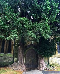 Probably my all time favorite day trip from London was a visit to The Cotswolds. I mean...little churches like those one with a tree growing alongside it is such a spectacular sight to see! Just take the train from London and you're there in a less than 2 hours! #thecitysidewalks