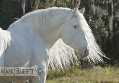 Stock Photos Horses, Equine Photography and Video by Mark J. Most Beautiful Animals, Beautiful Horses, Unique Animals, Brown Horse, Black Horses, Albino Horse, Magical Images, Clydesdale, Draft Horses