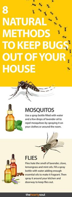 As far as possible, this post will concentrate on pest control tips that would assist keep away as much pests as you can. Some of the advises provided here will deal on specific pests but some may … Fly Repellant, Insect Repellent, Common Household Bugs, Lawn Pest Control, House Bugs, House Insects, Plants That Repel Bugs, Organic Gardening, Organic Farming
