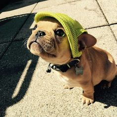 Sun protection; frog style 🐸🐸🐸 @watson_thefrenchie