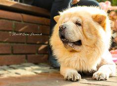 #photography #dog #umitcempamuk