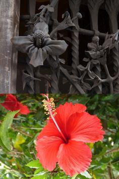 A la finestra del porter de la façana principal trobem les flors d'hibisc entrellaçades a les reixes. Spring, Plant