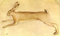 Drawing of a hare ( 15th century) from Codex Vallardi by Pisanello.