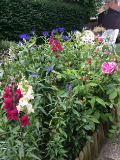 This is a nice plant combination - antirrhinums, roses and centaurea.