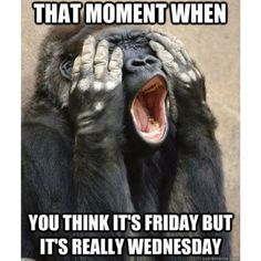 That Moment When You Think Its Friday But Its Really Wednesday good morning wednesday happy wednesday funny wednesday quotes wednesday image quotes wednesday quotes and sayings Wednesday Humor, Happy Wednesday, Wednesday Sayings, Hump Day Humor, Thursday, Happy Friday, Tuesday Meme, Friday Funnies, Funny Friday Memes