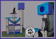 Gimnasios para gatos https://www.facebook.com/Lukasarango?fref=ts