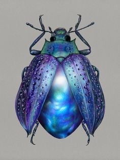 I Drew Beetles That Hide Colourful Minerals Underneath Their Shiny Wing Cases - Animal Kingdom Beetle Insect, Insect Art, Insect Wings, Cool Insects, Bugs And Insects, Arte Fashion, Coloured Pencils, Coloured Pencil Drawings, Cool Bugs