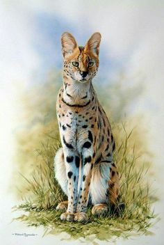 Serval by Richard Symonds Wildlife Paintings, Wildlife Art, Animal Paintings, Animal Drawings, Big Cats Art, Cat Art, Domestic Cat Breeds, Small Wild Cats, Serval Cats