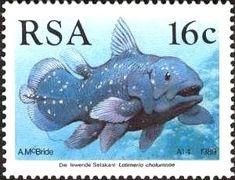 West Indian Ocean Coelacanth (Latimeria chalumnae)