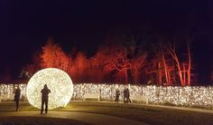 Botanischer Garten Berlin. Winter Wunderland