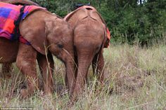 The animals have developed a close friendship after being integrated into the herd of orph...