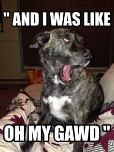 Funny dog captions