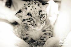 Big kitty!