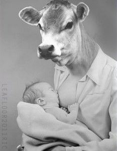 We are the only species that drinks the breast milk of another species, thereby denying the calves their mother's milk, slaughtering their babies, and diseasing our own bodies. Karma!