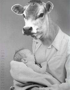 Cows Produce Human Breast Milk?