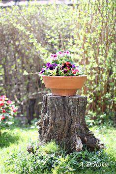 kwiaty, ogród, wiosna, dom Dom, Gardening, Plants, Garten, Lawn And Garden, Planters, Garden, Plant, Planting