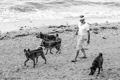 Ryukyu Ken -Dogs of the Ryukyu Islands