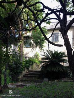 Historical appeal: this #house is conceived to host a big family needing a lot of space and wishing to make revive its original features - #Villa for sale in Quarto, nearby Genoa (Italy) #garden #trees