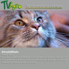 #AnotaElDato Cómo marcan su territorio los animales domésticos.