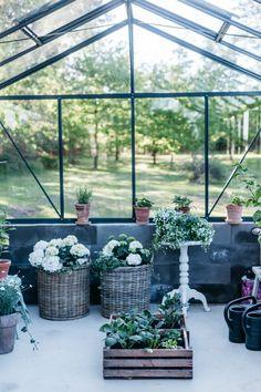 kasvihuone arkistot - Page 8 of 37 - Uusi Kuu Garden, Plants, Garten, Flora, Plant, Lawn And Garden, Outdoor, Tuin, Gardens