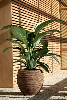 air purification plants - Air So Pure When old within thought, a pergola may be Green Plants, Decor, Grow Tent, Plant Decor Indoor, Home And Garden, House Plants Indoor, Small Space Interior Design, Garden Design