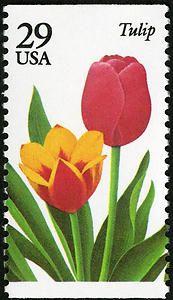 29c Tulip single
