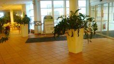 Wilhelmiina aula